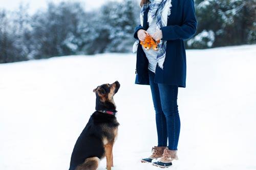 给你支招:孕妇如何与狗狗共处