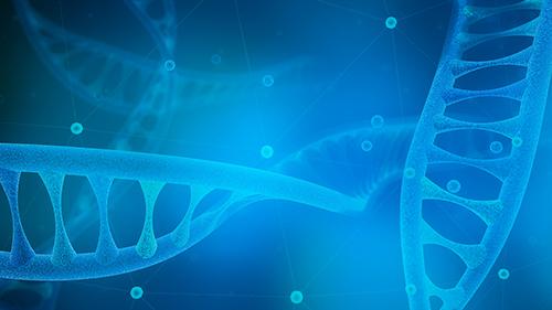 早发现早预防,香港无创DNA产前检测怀孕满10周即可进行检测。